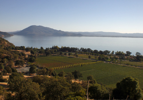Vineyards & Clear Lake