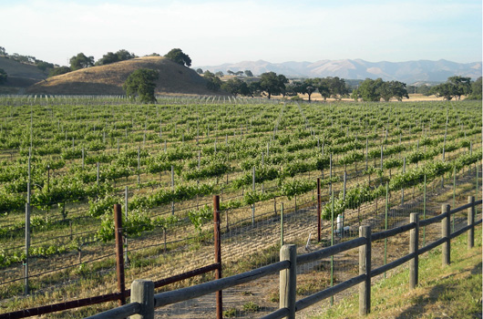 Vineyards in Santa Barbara county