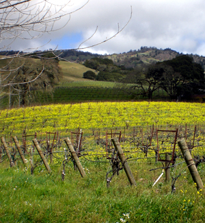 Mendocino Wineries