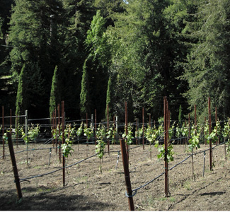 Santa Cruz County Wineries