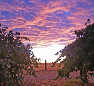 San Joaquin Valley Wineries