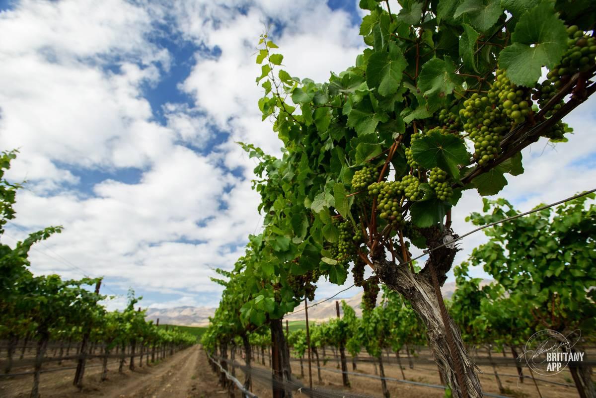 stephen ross wine vineyards