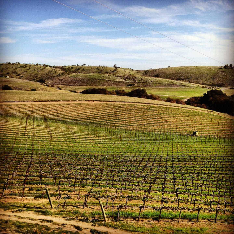 Ecluse winery vineyard