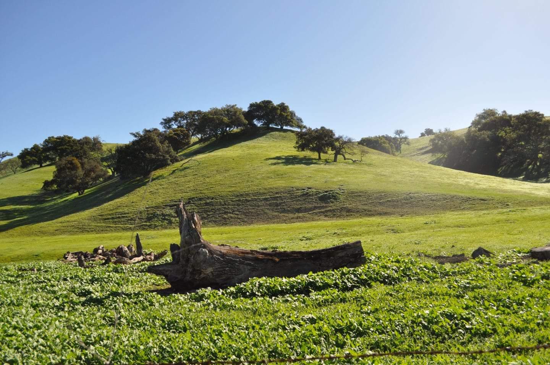 beautiful california wine country