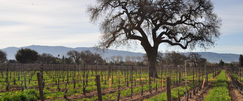 California winery vineyards