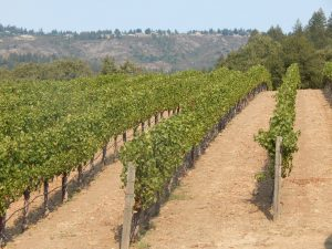 Ehlers vineyards