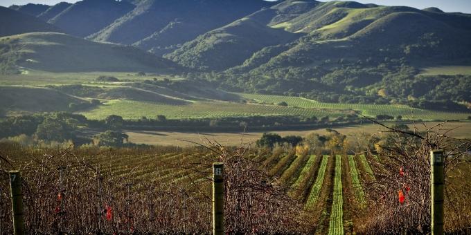 Longoria Winery