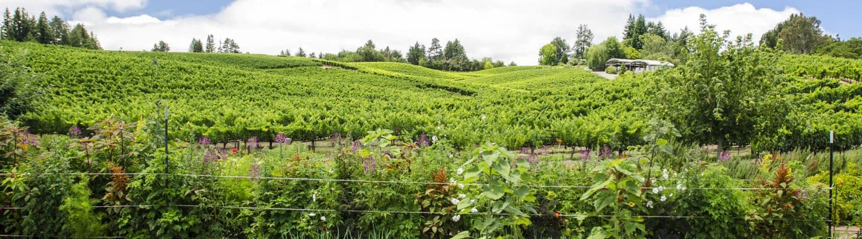 Quail Hill Vineyard