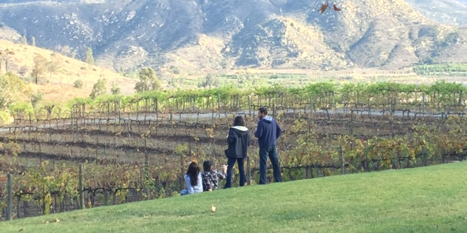 Orfila winery vineyard