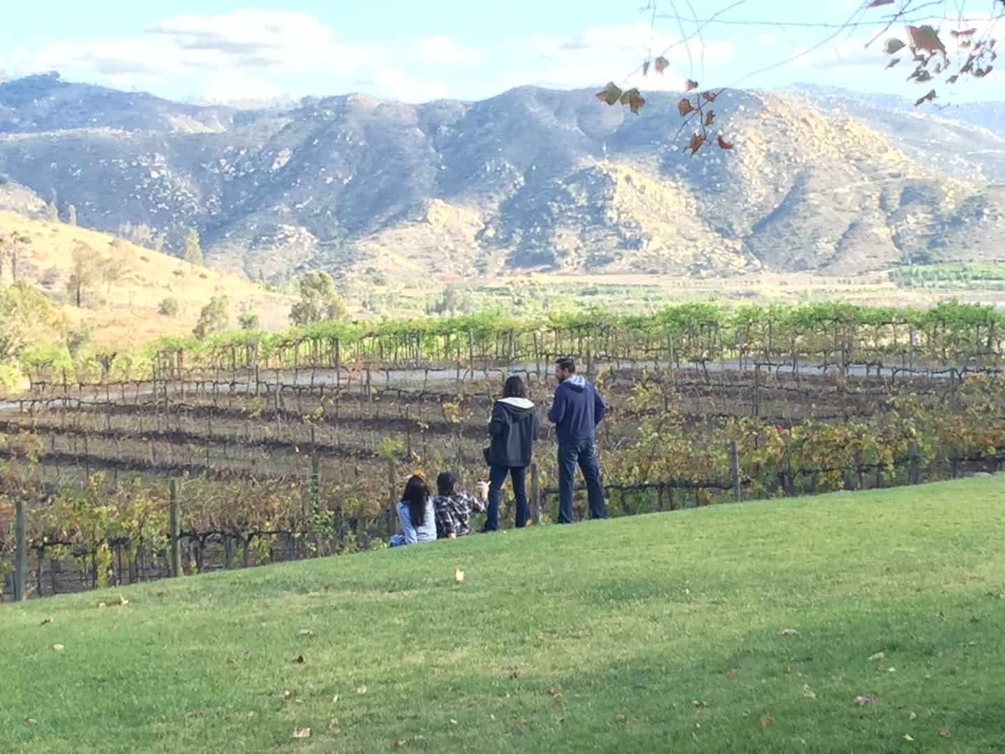 Orfila winery vineyard