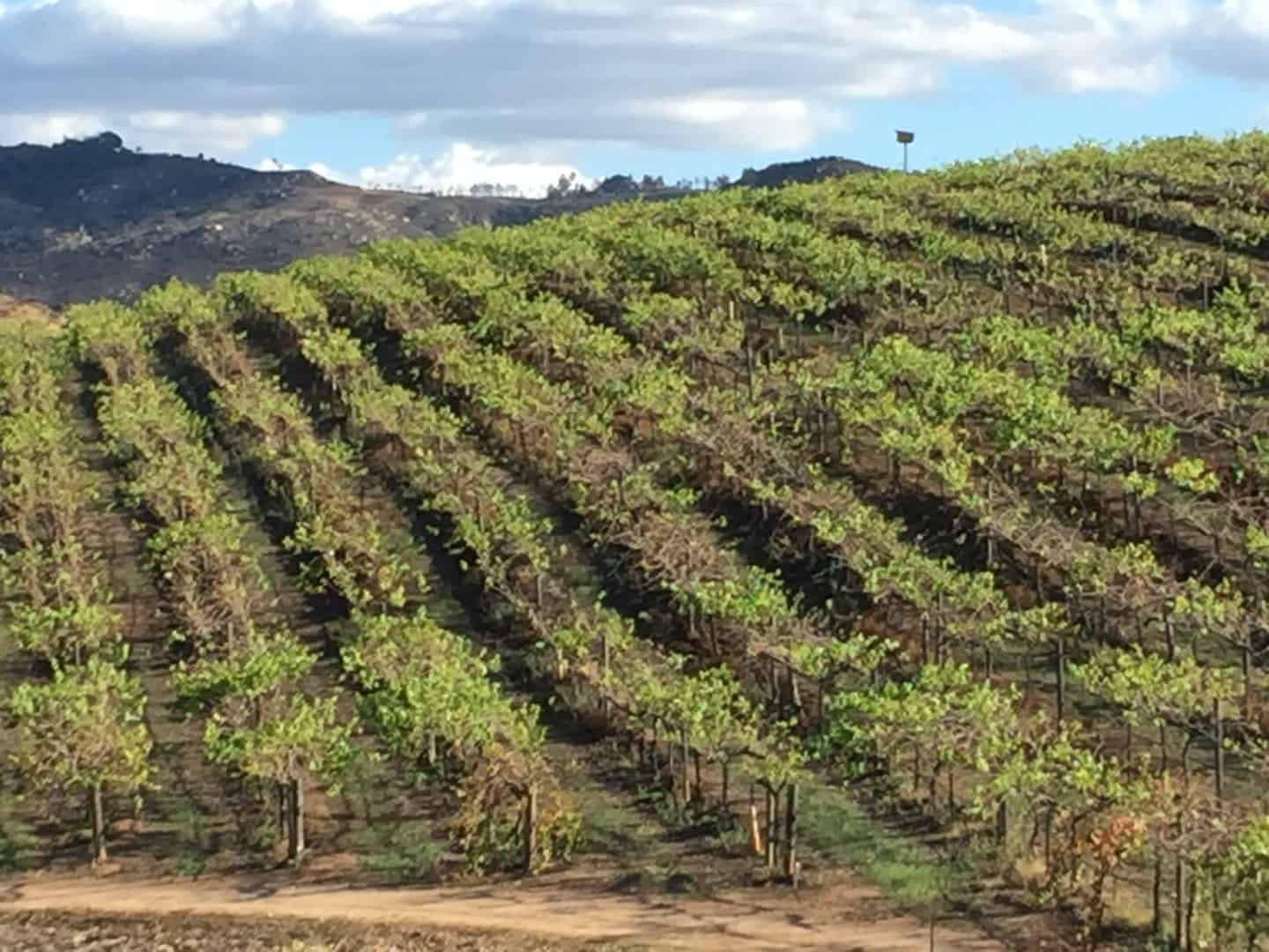 San Diego vineyards
