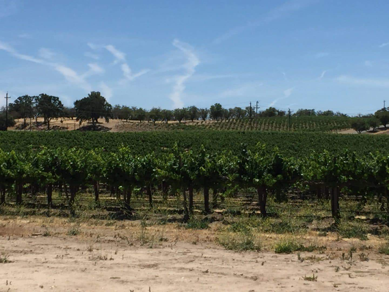 steinbeck vineyard paso robles