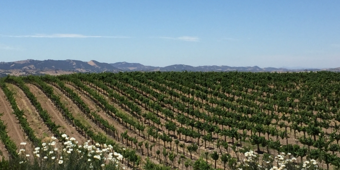 eberle vineyards paso robles