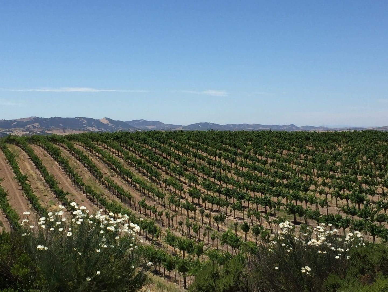 eberle vineyards paso robles