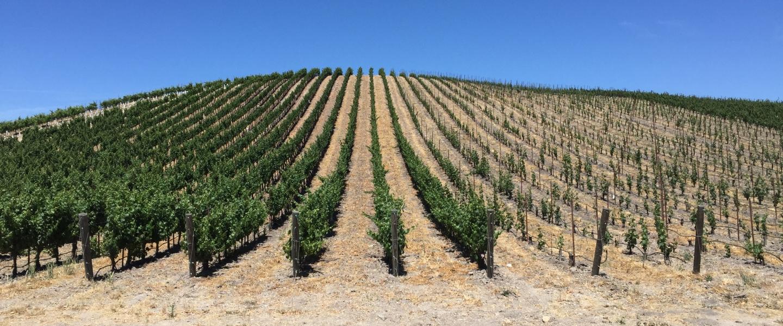 California vineyard winery paso robles