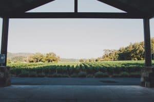 madrigal vineyards view