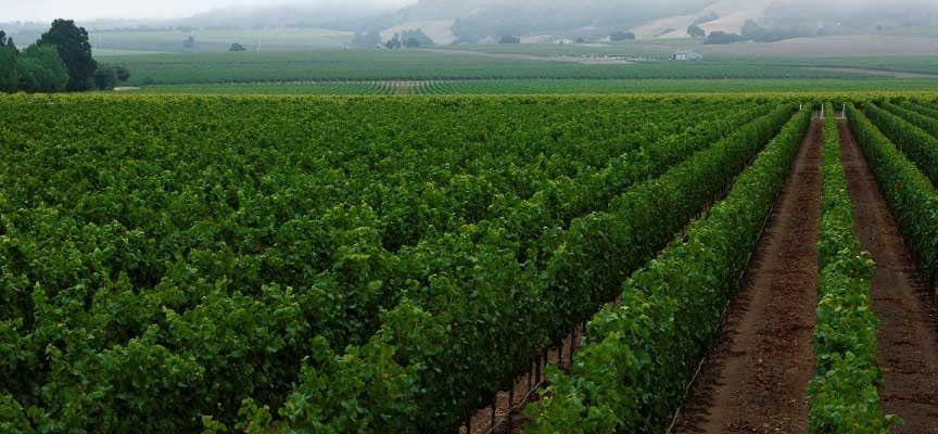 Morgan winery vineyards