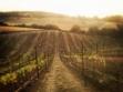 Lock Vineyard