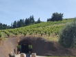 bella vineyards cave outside