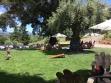 bella vineyards outside