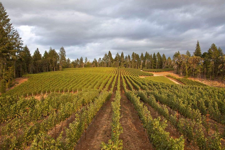 Charles Krug vineyards st helena