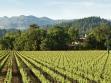 charles krug Vineyard_Winery