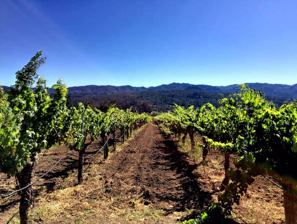 corison winery vineyards