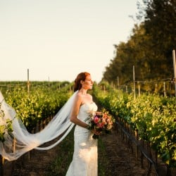 Top 5 Winery Wedding Venues in Santa Barbara