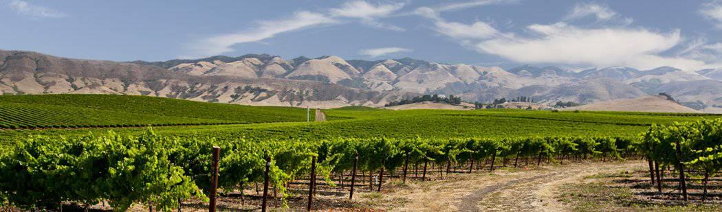edna valley vineyards view