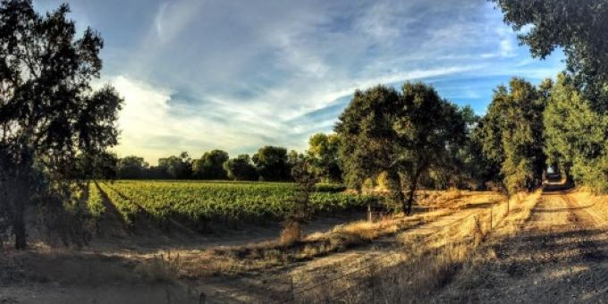 Heritage oak winery vineyard