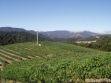 netted-vineyard-view
