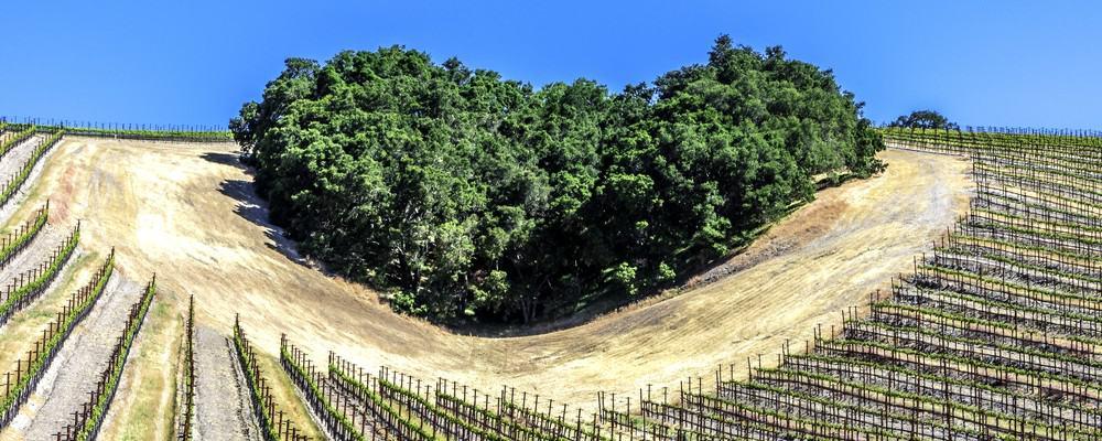 paso robles vineyards 3