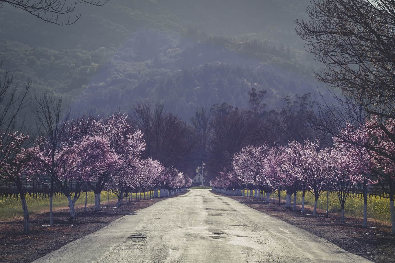 Napa valley california winery