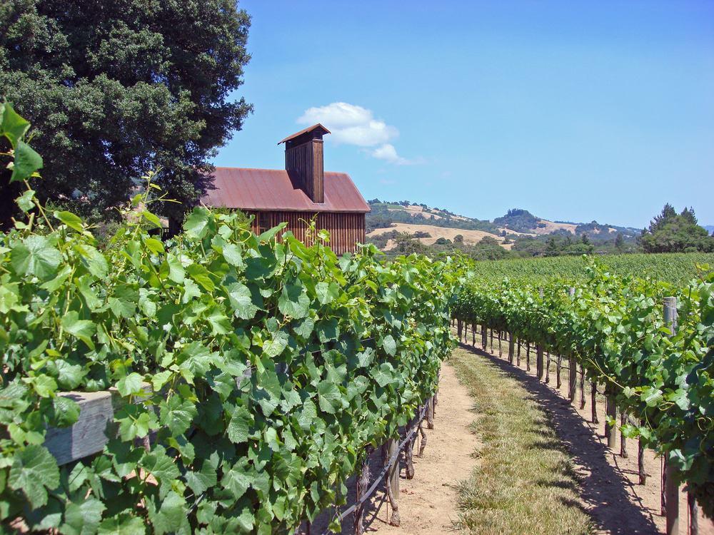 Sonoma California Winery
