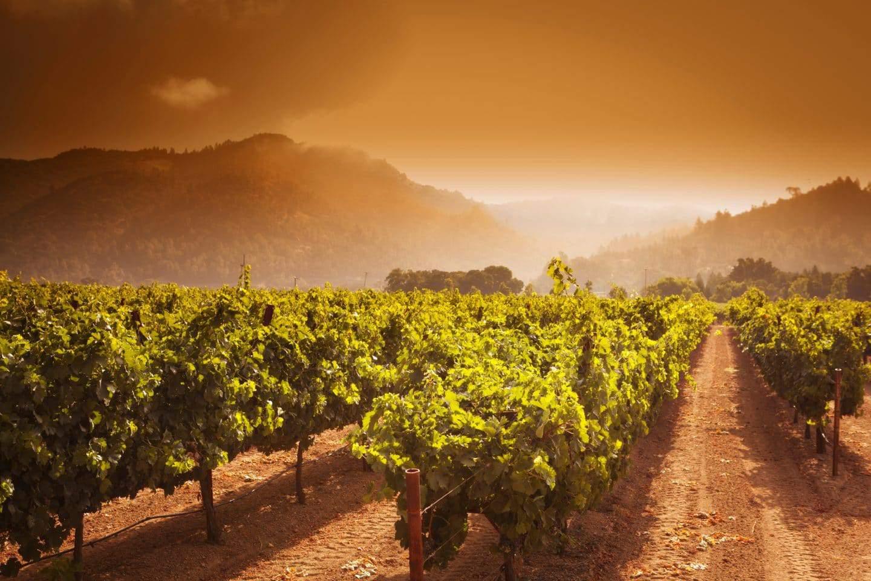 v satui winery vineyards