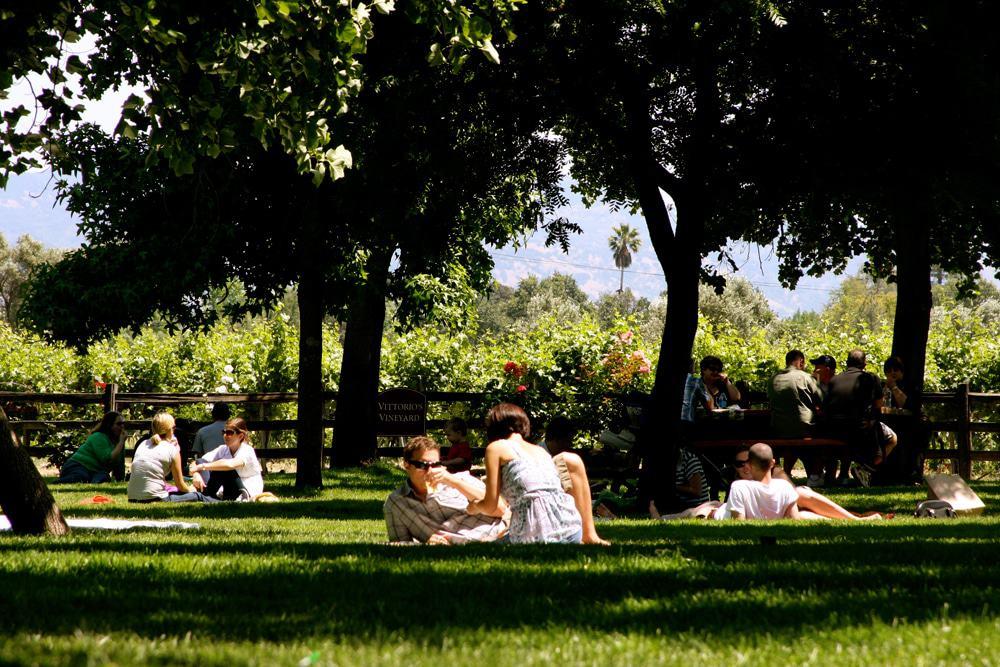 v satui winery picnic area