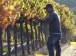 Vidal at Harvest time