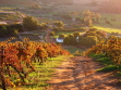 Wine Country in fall for wedding
