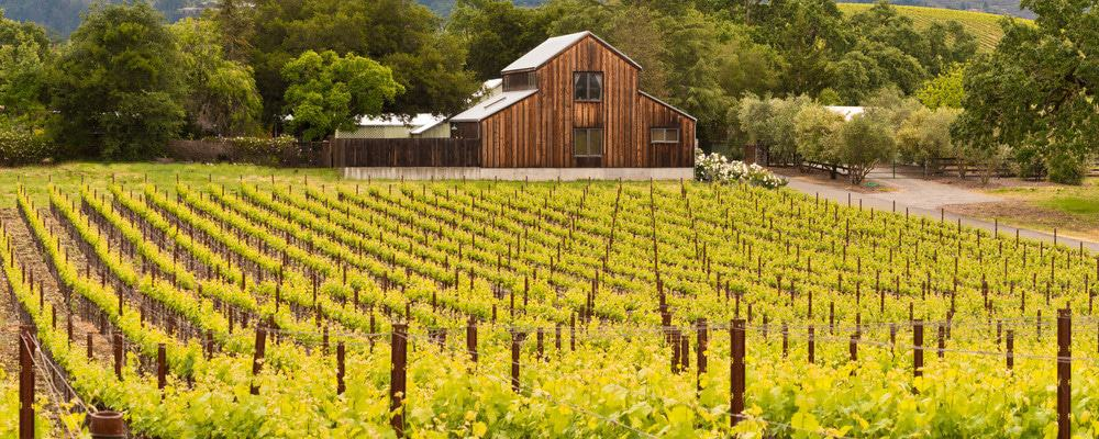 Beautiful wine country scene