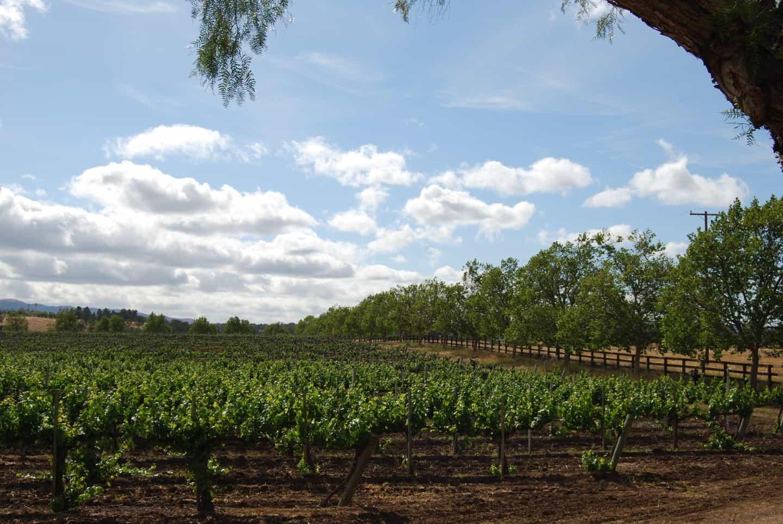 vineyard near santa ynez california winery