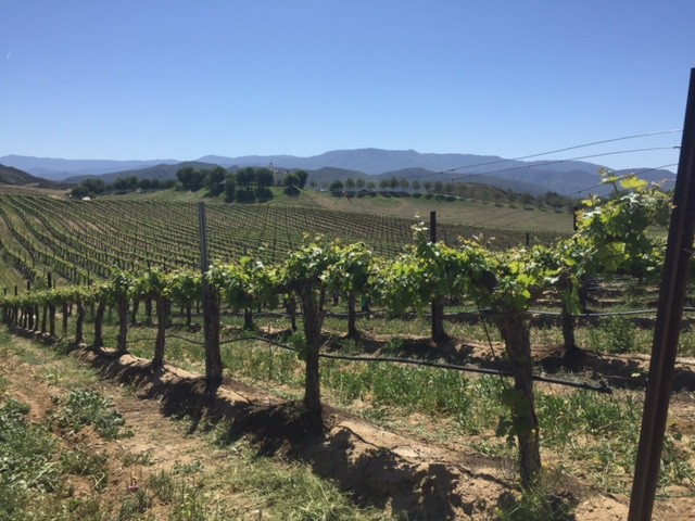 Temecula Vineyards from Leoness Cellars