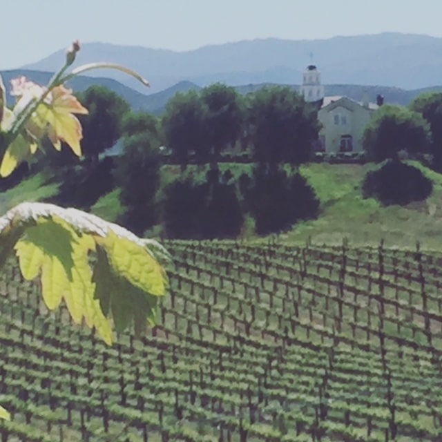 View of Church and Vineyards Temecula