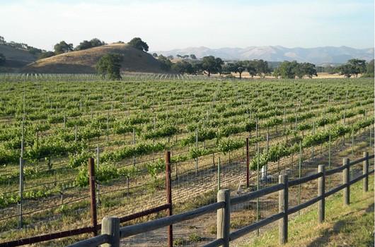 Santa Ynez valley looking north