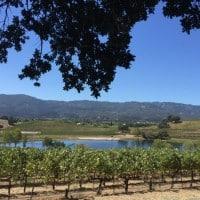 Quintessa winery