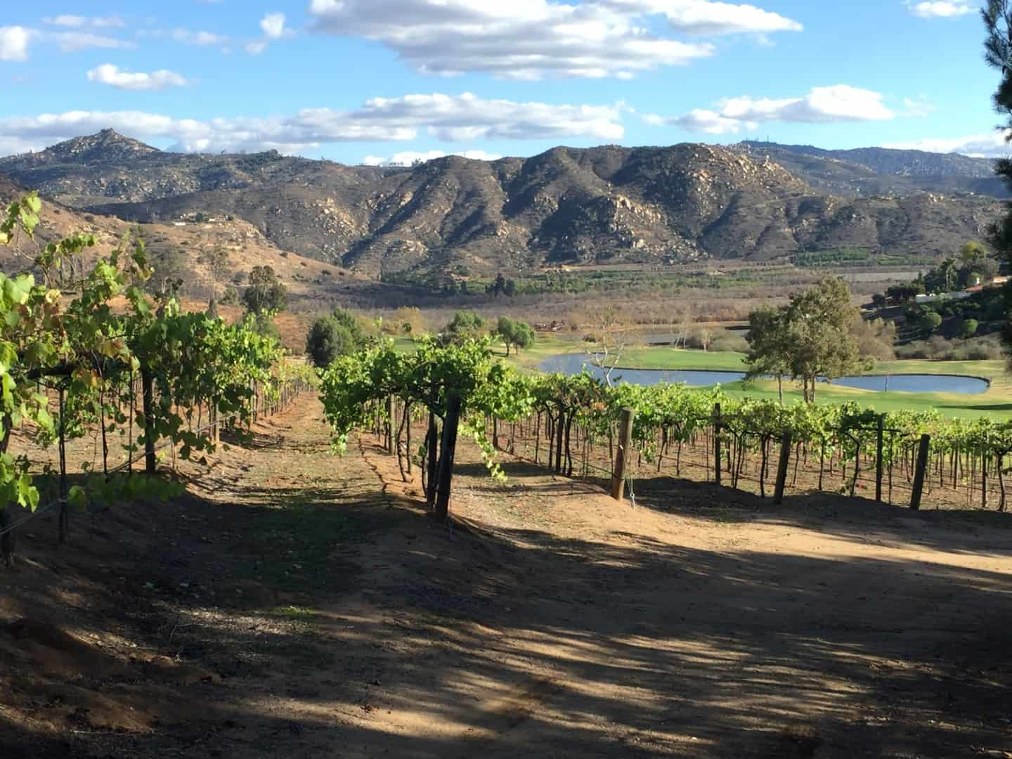 San Diego Wine Country Vineyards