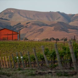 Edna Valley Wineries: Hidden Gems of the Central Coast