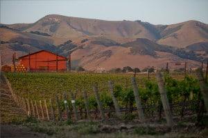 Chamisal vineyard and winery