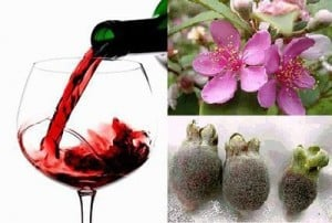 Vietnam Myrtle wine