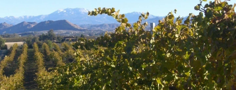 mount palomar winery temecula