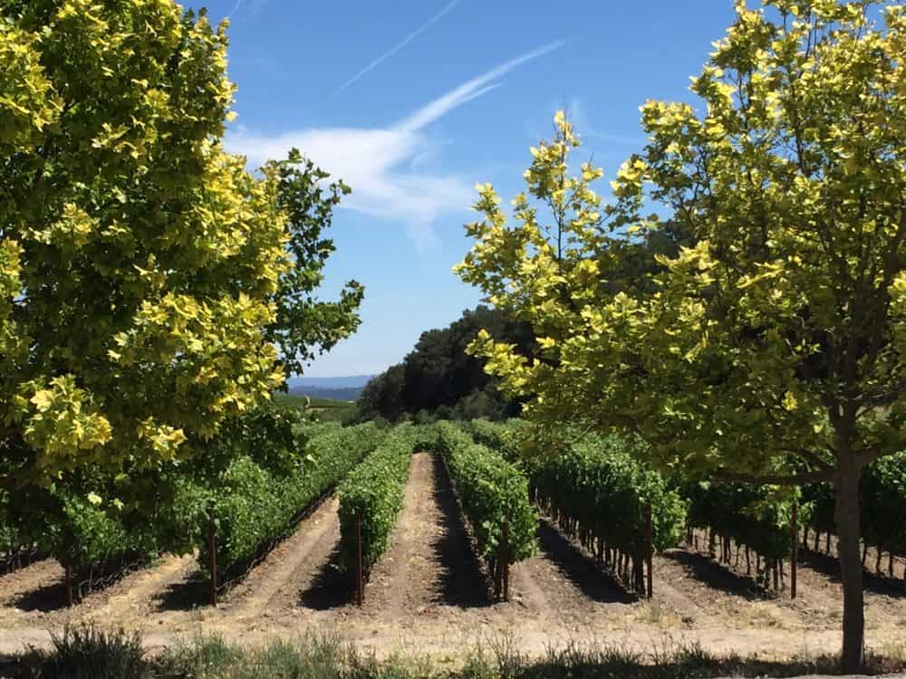 The 10 Best Wineries to Visit in Paso Robles for 2018 - California Winery